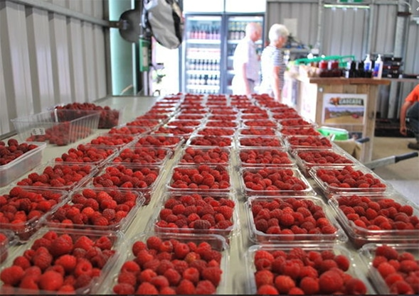 Westerway Raspberry Farm produce