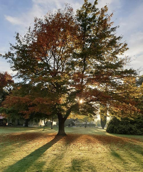 tynwald park tree
