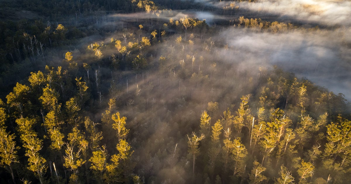 derwent valley trees from the air